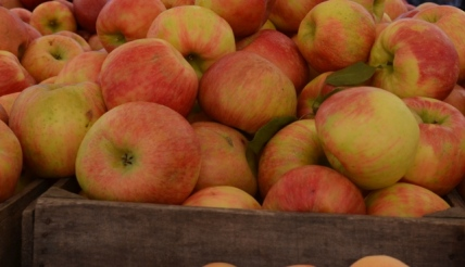 Union Square Greenmarket Fall Apples