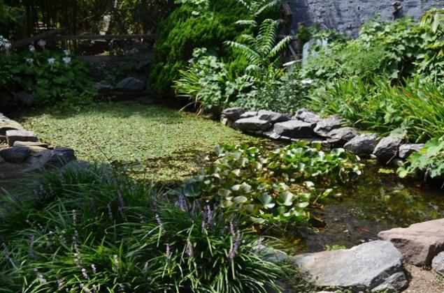 Urban Garden Pond in Central Harlem