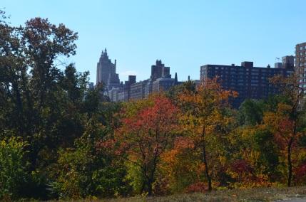 Central Park Fall 2013 11