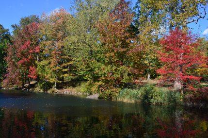 Central Park Fall 2013 2