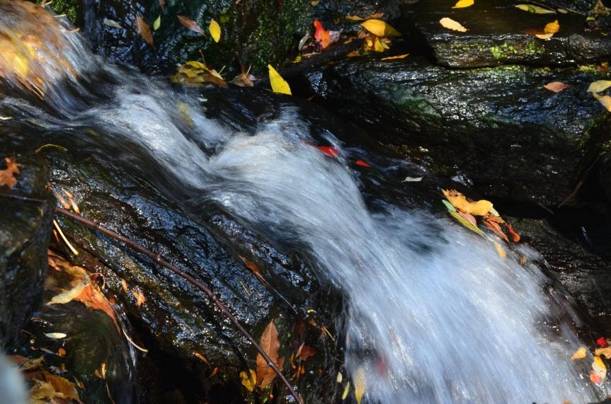 Central Park Fall 2013 3