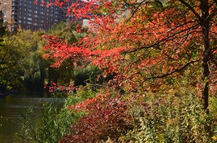 Central Park Fall 2013 4