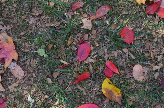 Central Park Fall 2013 6