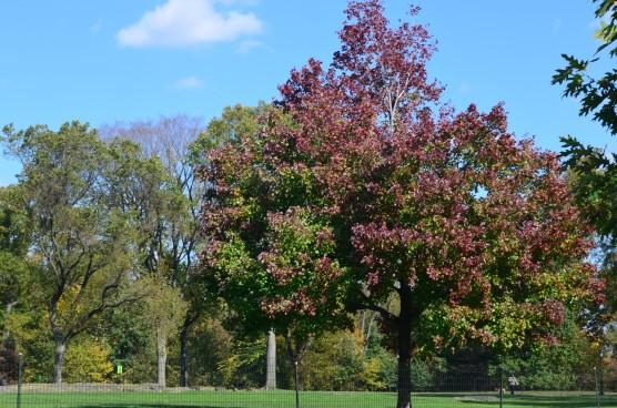 Central Park Fall 2013 9