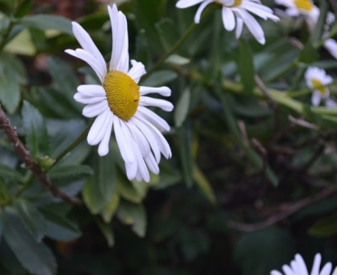 Daisy in Riverside Park