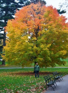 Bronx Botanical Garden 4