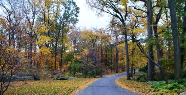 Bronx Botanical Garden 7