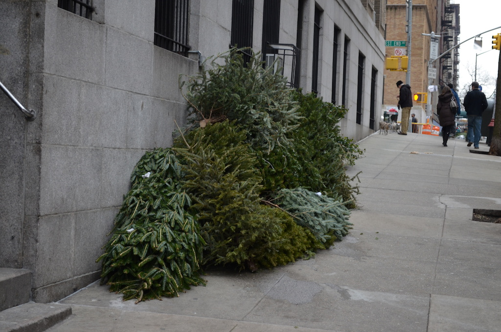 The Life Of A Christmas Tree In NYC