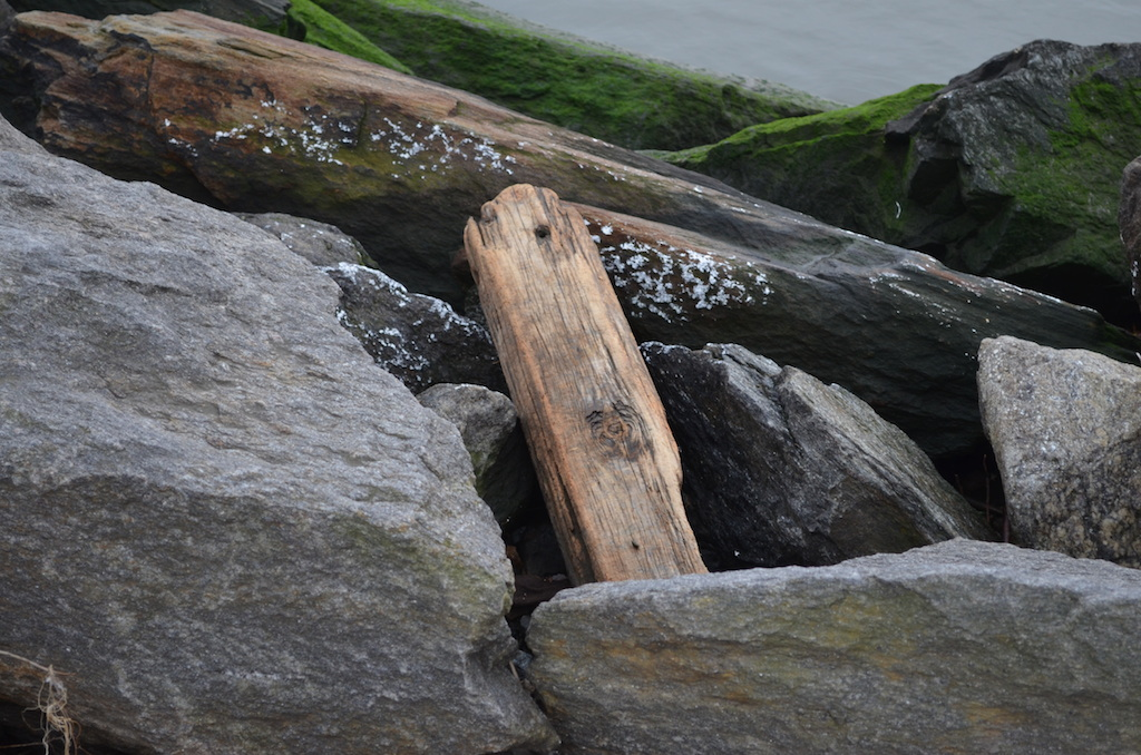 Drift Wood I in Riverside Park