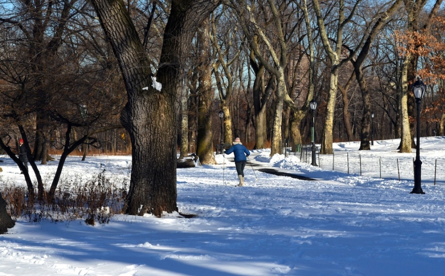 Cross Country Skier in Central Park