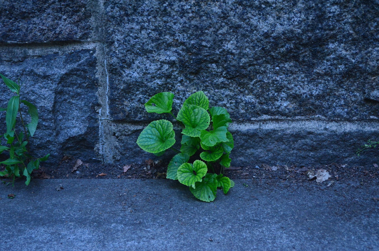 Plant Grows in Concrete