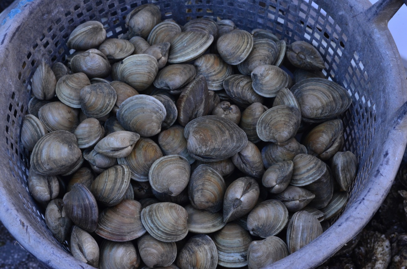 Long Island Clams