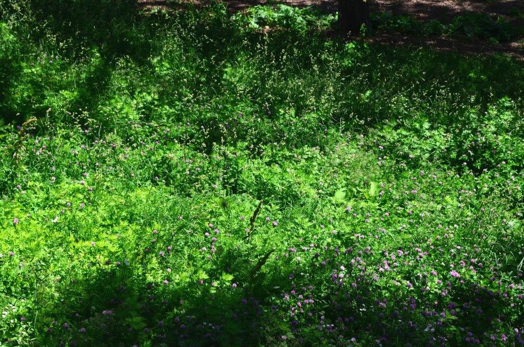 Summer Flowers In Saint Nicolas Park
