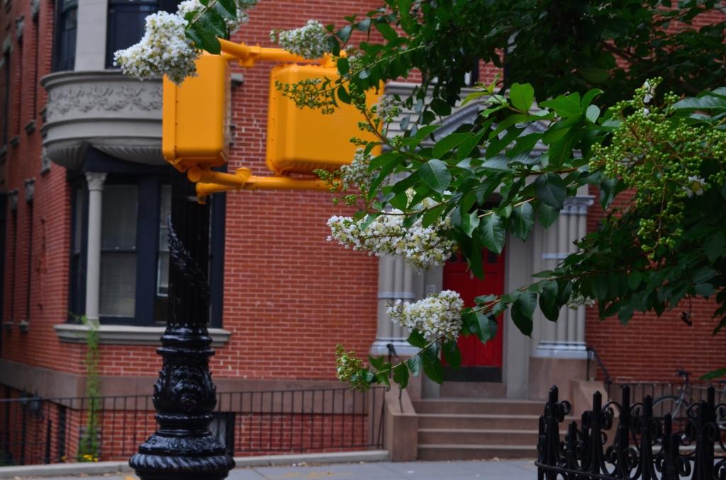 Summer Flowers In Brooklyn Heights