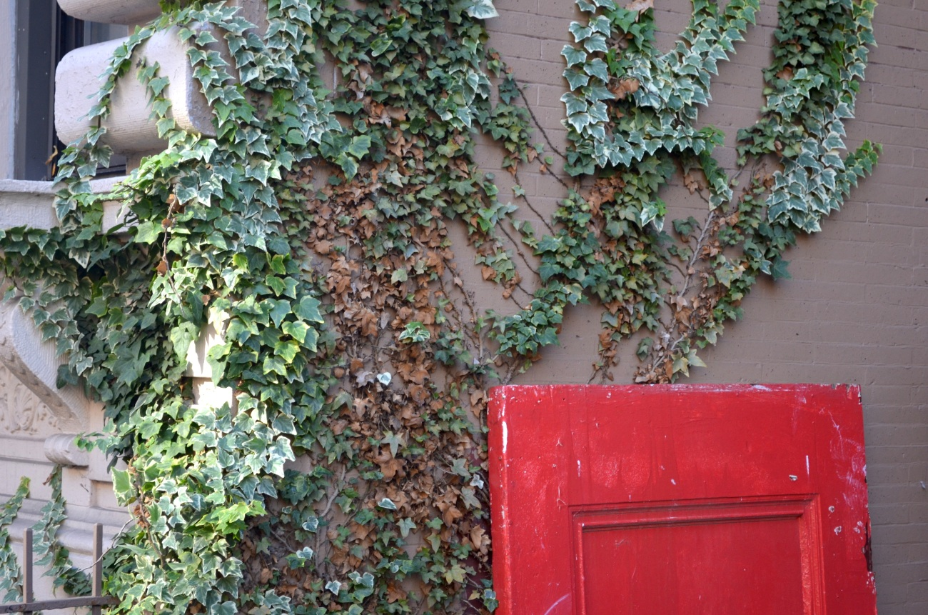 Ivy with Red Door in Harlem