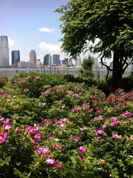 Jersey City Across from the Hudson River