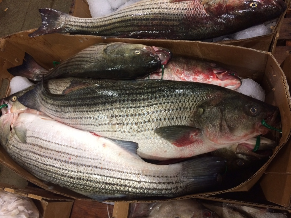 Fresh Striped Bass at the New Fulton Fish Market