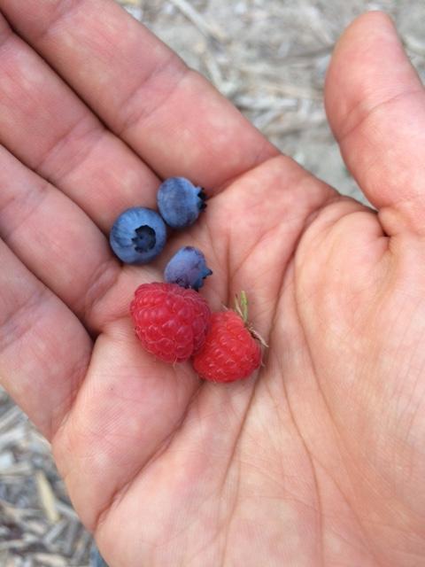 Organic Garden Snacks