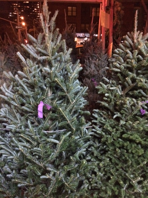 christmas-tree-lot-in-new-york-city