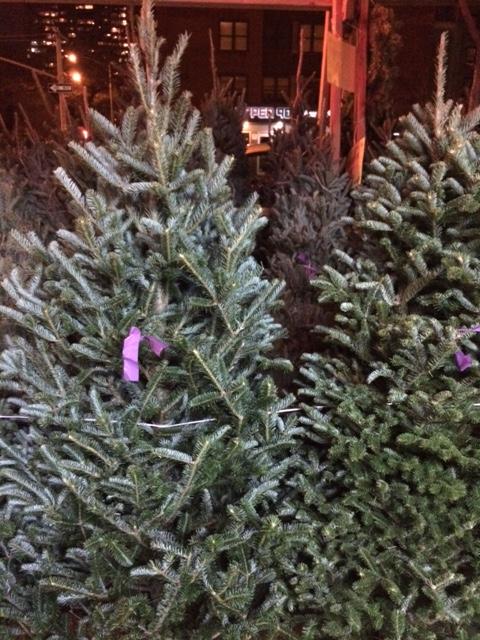 Christmas Tree Lot In New York City