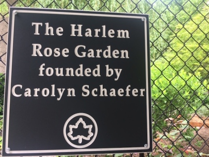 Harlem Rose Garden founded by Carolyn Schaefer