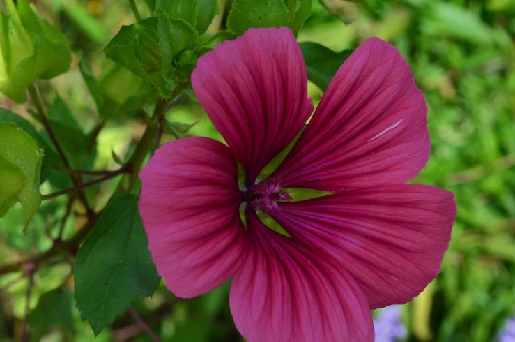 Claude Monet Garden Flower