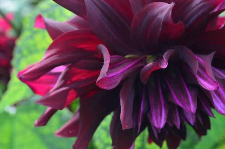 Different Flowers at Claude Monet Garden