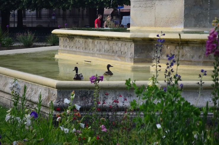 Duck Fountain