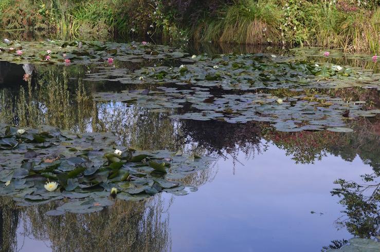 Lillypads at Claude Monet Garden