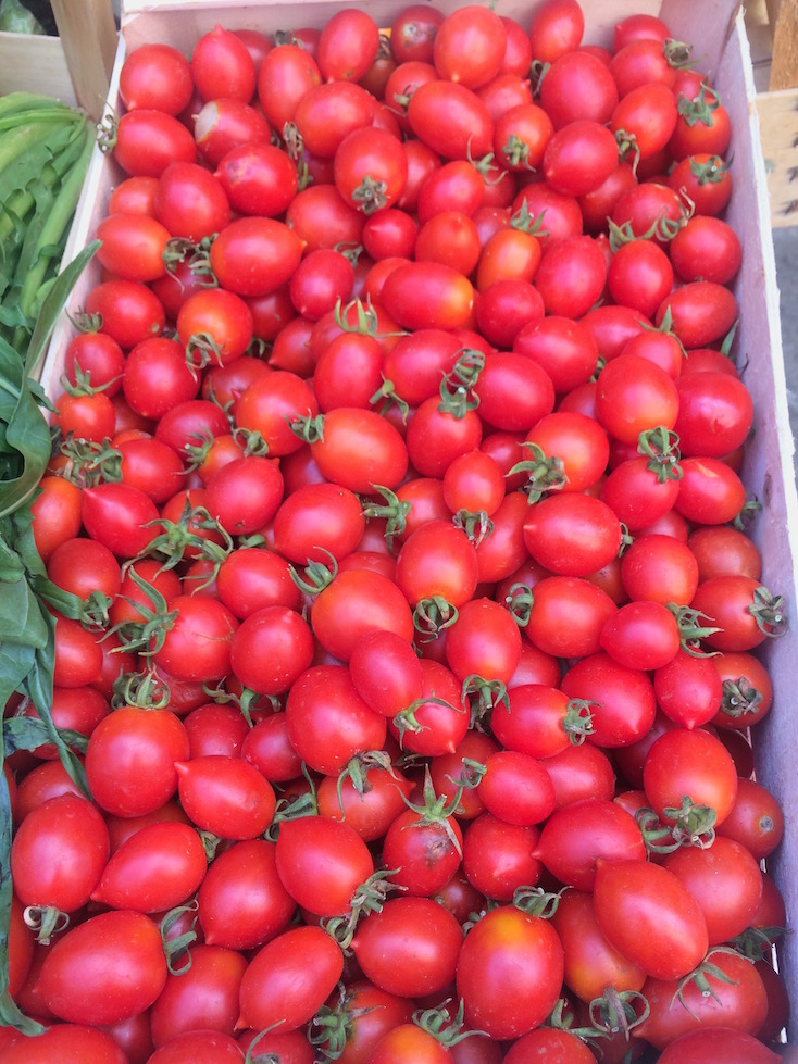 Fall Tomato Harvest in Southern Italy