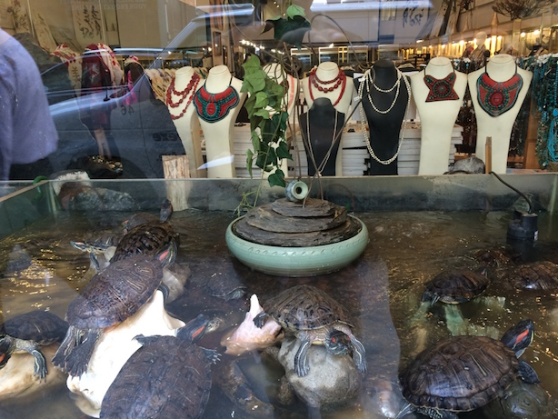 Turtle Display in New York City Store